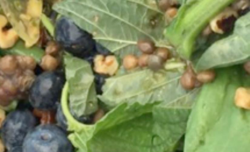 Spinach Salad with Lemon Basil Dressing
